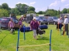 lots-of-dogs-checking-out-the-agility-race-track