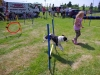 markree-dog-agility-with-lough-bo-boarding-kennels-who-sponsored-the-2013-dog-and-cat-competitions