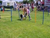 dog-going-round-the-stand-up-sticks