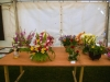 flower-displays-in-the-home-industries-tent