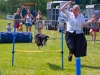 markree-dog-agility-wow-the-crowd